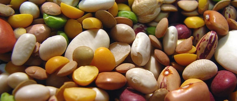 Перечень бобовых растений