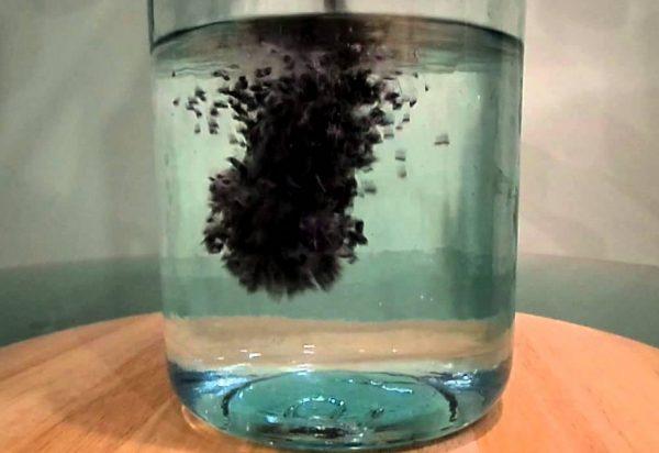 На ранних сроках активированный уголь не оказывает негативного влияния на плод