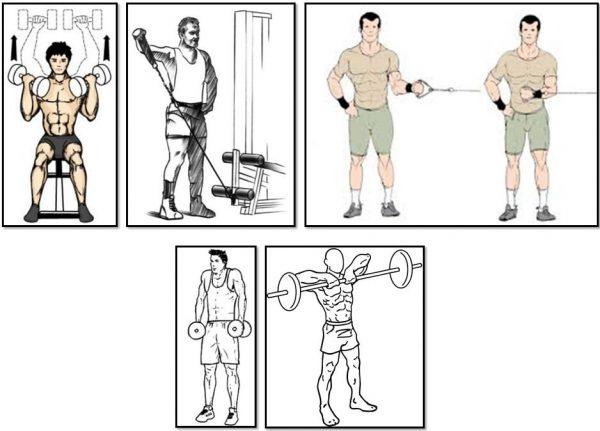 Тренировка эктоморфа: особенности, этапы программы для набора мышечной массы