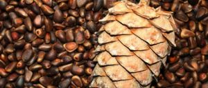 Каштан китайский, жареный: калорийность на 100 грамм — 239 ККал. Белки, жиры, углеводы, химический состав.