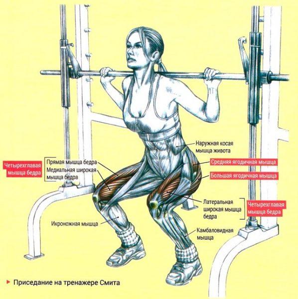 Приседания в тренажере: на какие группы мышц рассчитаны