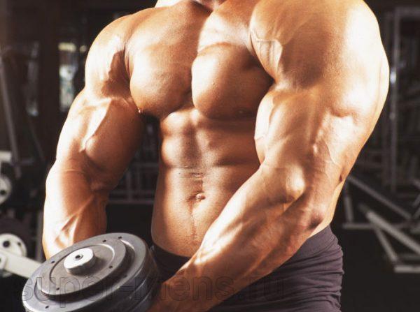 Режим тренировок и питание во время приема Метандростенолона