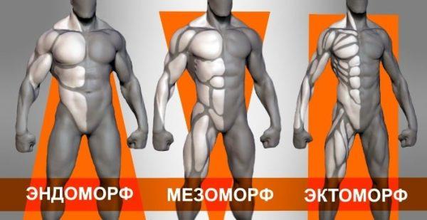 Зачем знать свой тип телосложения?