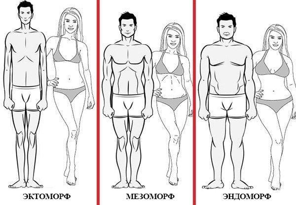 Типы телосложения: особенности