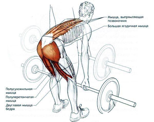 Мертвая тяга: когда нужно делать упражнение