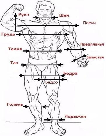 Как определить идеальные пропорции мужского тела