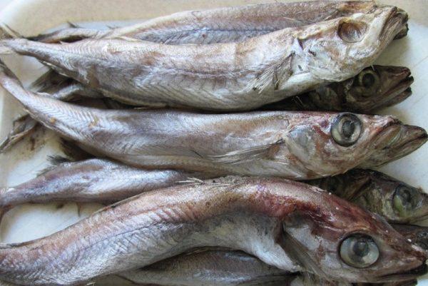 Рыба путассу: витамины и микроэлементы
