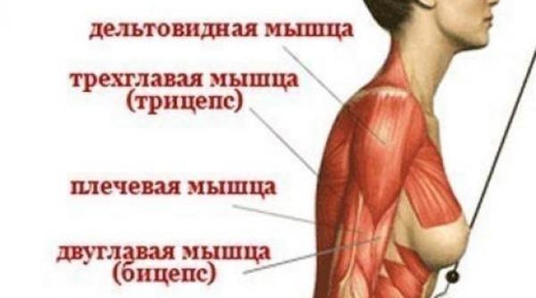 Лучшие упражнения, чтобы накачать красивые и сильные руки девушке используя гантели и без них
